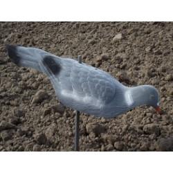 Lokvogel Duif Schalen