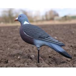 Enforcer lokvogel duif full body 1o st